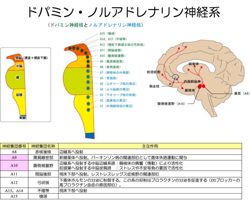 ドパミン ノルアドレナリン神経系