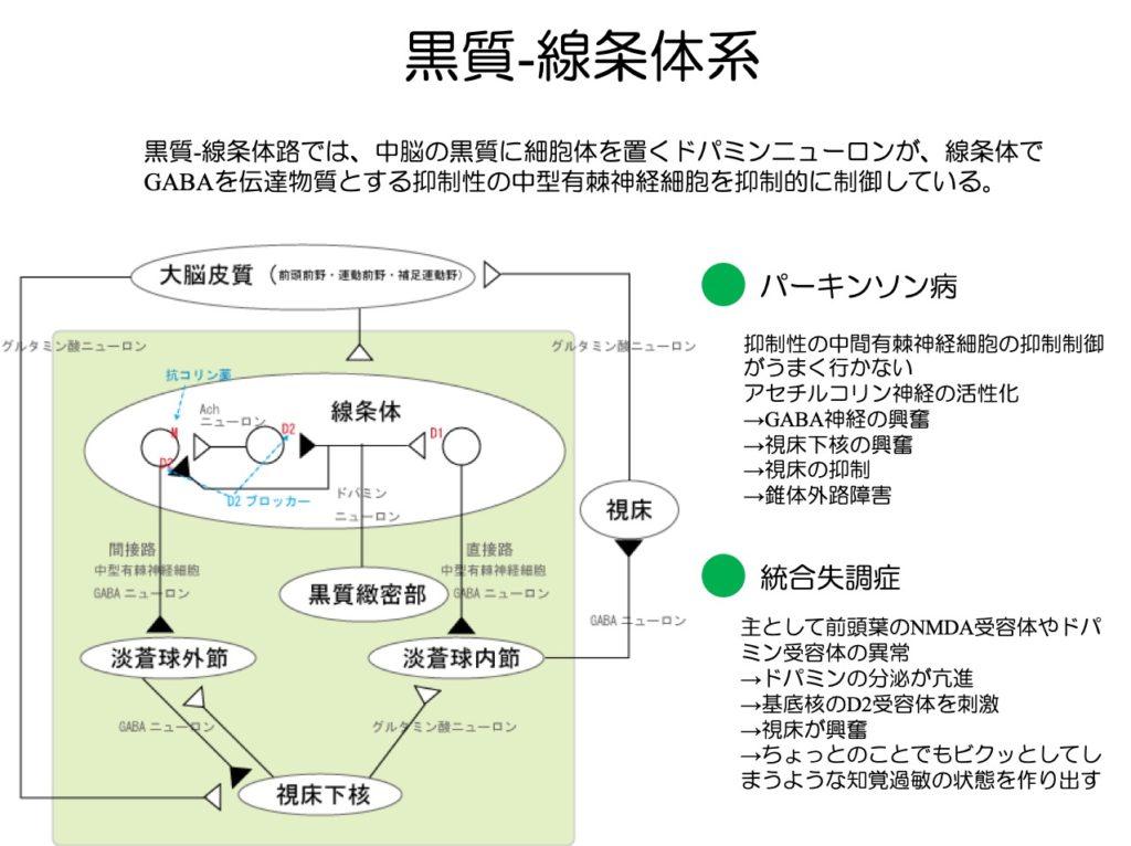 黒質線条体系