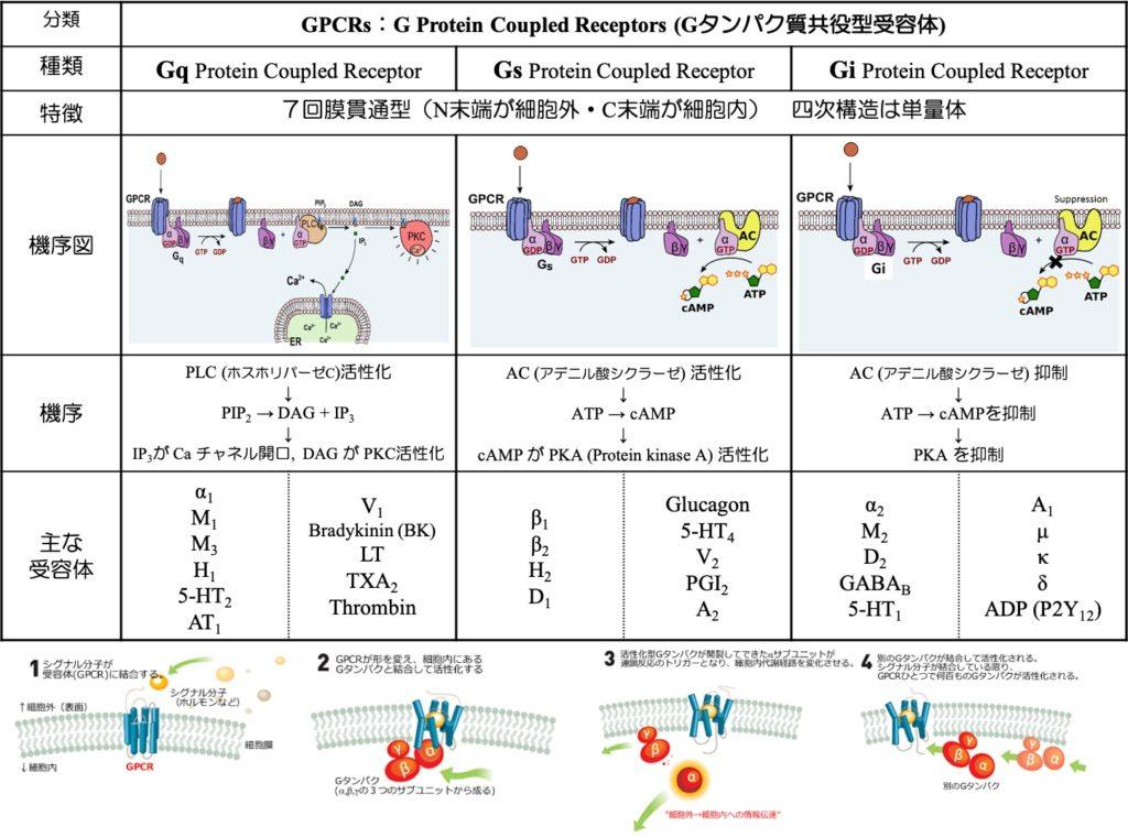 Gタンパク質共役型受容体一覧